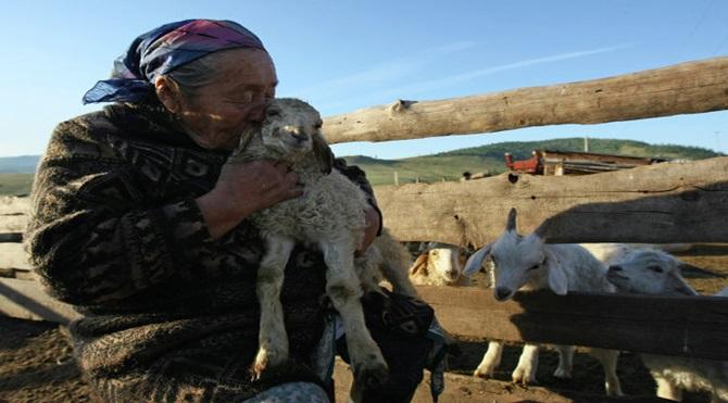 tuvalı çoban