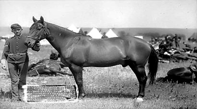 comanche-horse
