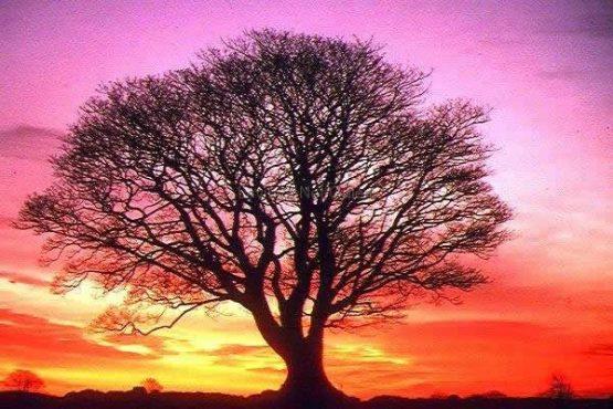 Bir_Ağaç_Neye_Yarar