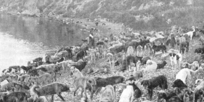 İstanbuldaki-Köpeklerin-Hayırsızada-Sürgünü