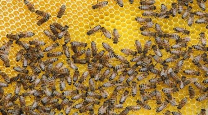 arılar_masalı
