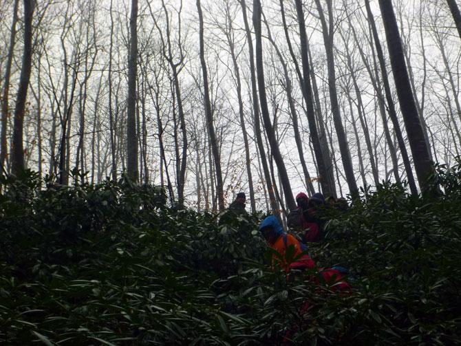 belgrat_ormanları