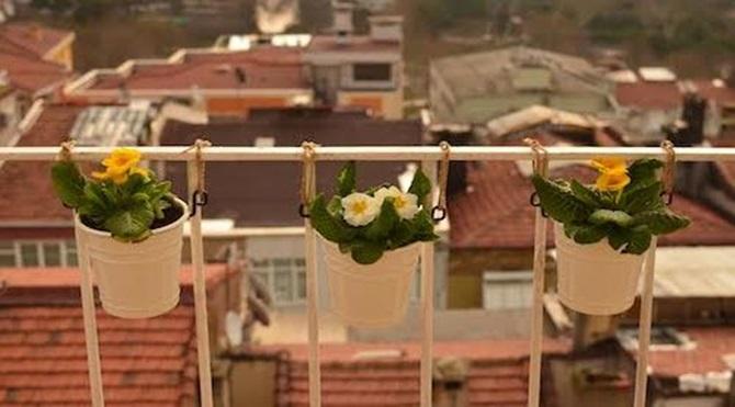 Saksı bitkileri Çiçekler otlar ve sebzeler