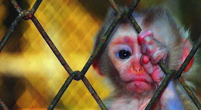 tutsak_kafes_hayvanat-bahçesi
