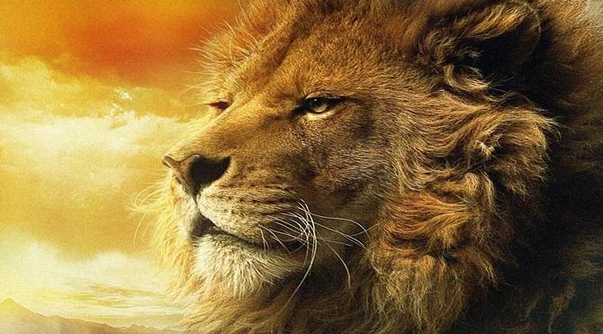 aslan-resimleri-3