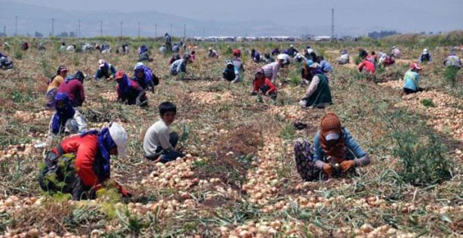 mevsimlik-işçiler