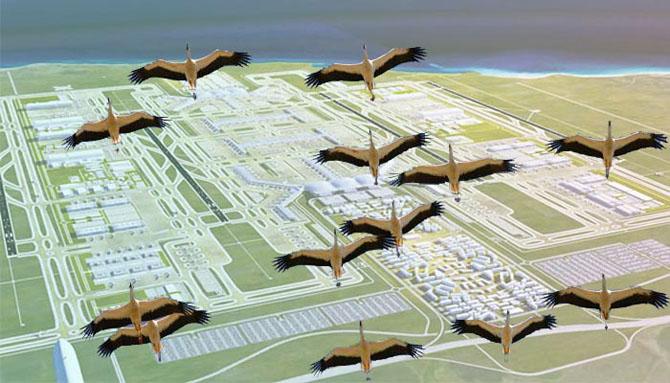 havaalanı_leylekler