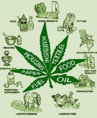 marijuana-uses_5125e36ada850_w1500
