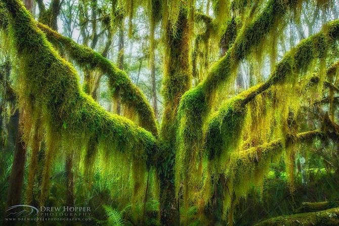 Dünyanın en görkemli ağaçları