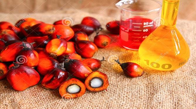 oil-palm-fruits-palm-oil-27461371
