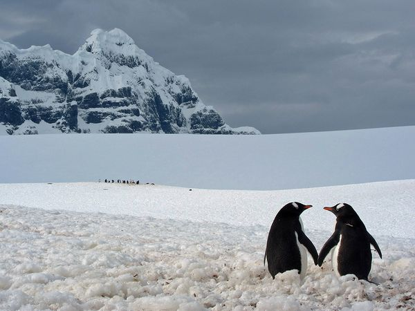 penguin-pair-point-lockroy_72970_600x450