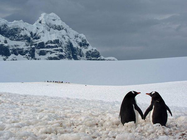 penguin-pair-point-lockroy_72970_600x450