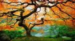 Şarkı söyleyen ağaçlar