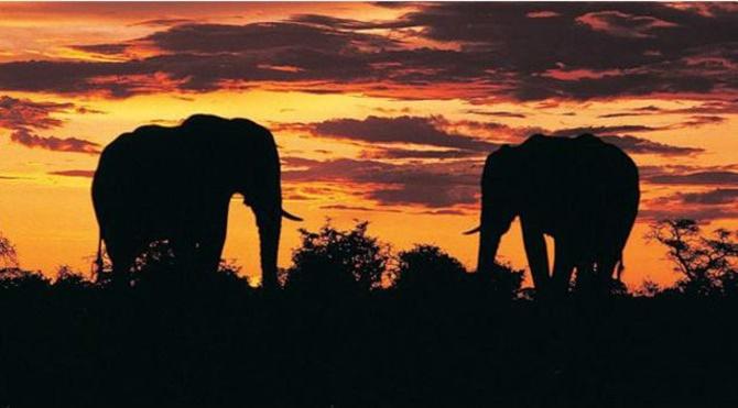 141022100657_elephants_624x351_bbc_nocredit