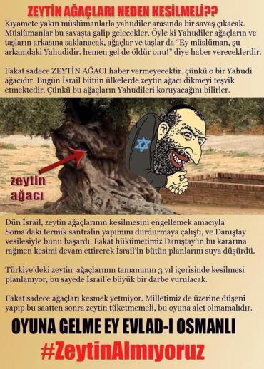 zeytin_ağacı