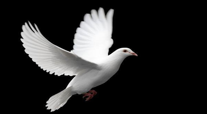 Çocuklar ve Güvercinler Hakkında