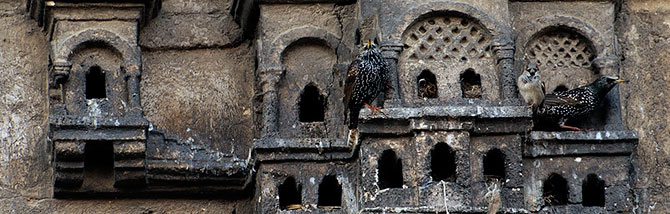 Osmanlı'da Kuş Sarayları