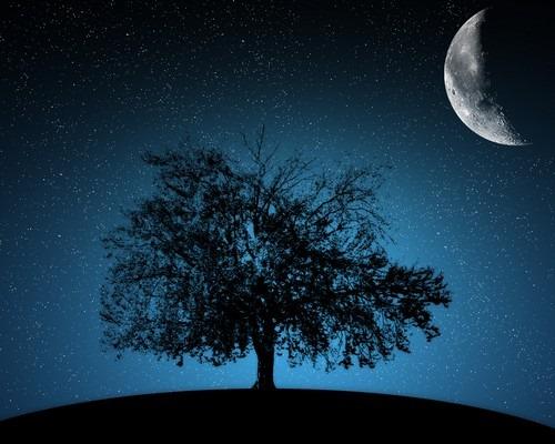 ceviz ağacı, songül aydın