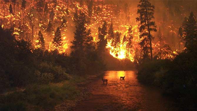 amazon orman yangınları