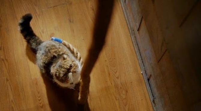Kedi İp Teoremi'ne disiplinlerarası bir yaklaşım