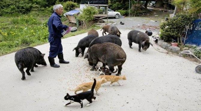 Fukuşima hayvanlarının koruyucusu: Naoto Matsumura