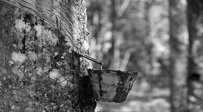 Ağlayan ve ağlatan ağaç