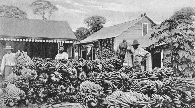 Views of Central American Countries, 1902-1911 (RARE 972#1, Bananas