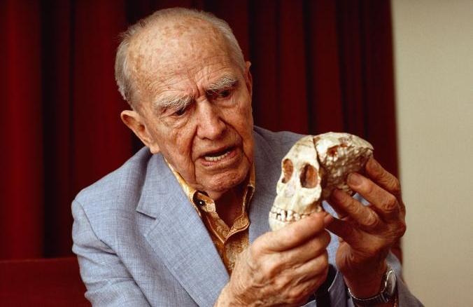 """İnsan evrimini açıklamaya çalışan """"katil maymun"""" teorisinin sahibi Raymond Dart, bulunan ilk australopithecus olan Taung Çocuğu'nun kafatasını tutuyor. [Fotoğraf: David L. Brill, National Geographic Creative]"""