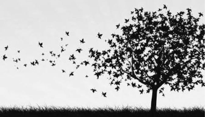 hüzün kovan kuşları