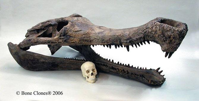 en büyük timsah