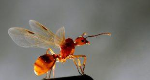 Kanatlı Karıncalar (Fotoğraf: fotokritik, haldunK)