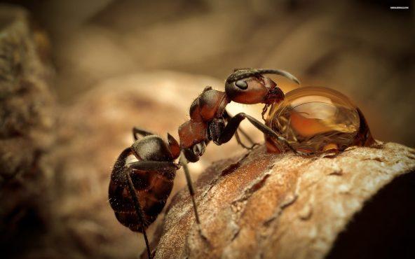 Bilim_Kadını Emily_ile_İnsanlar_Ve_Karıncalar