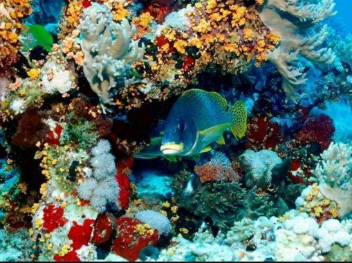 Büyük Set Resifi'nin eski hali.