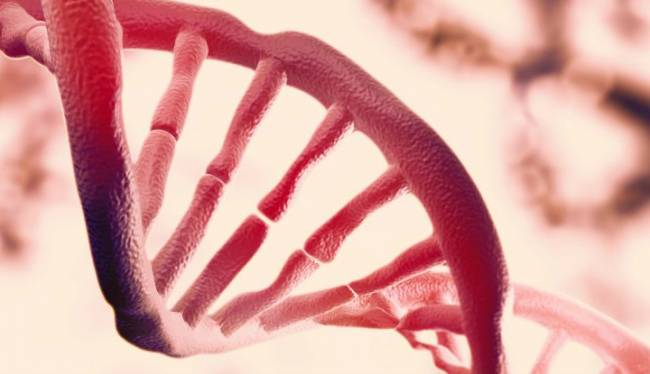 Bilim insanları, gen yazılımının değiştirilerek süper akıllı, süper güzel ve süper yetenekli insanı ortaya çıkacağı bir proje üzerinde çalışıyor.
