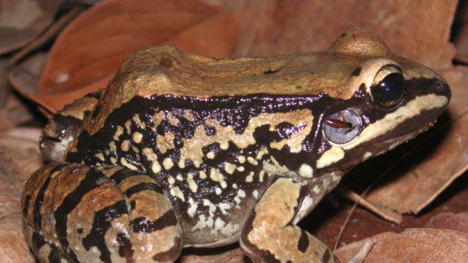 Enerji-Şampiyonu-Kabak-Kurbağalar