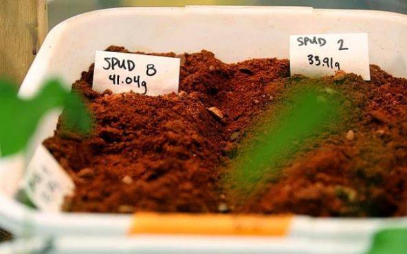 Hollandalı bilim insanları, NASA'nın geliştirdiği Mars toprağına benzer toprakta ürün yetiştirmeyi başardı. Test edilen ürünlerde sağlığa zararlı metaller bulunmadı