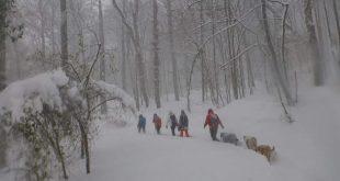 belgrad ormanları