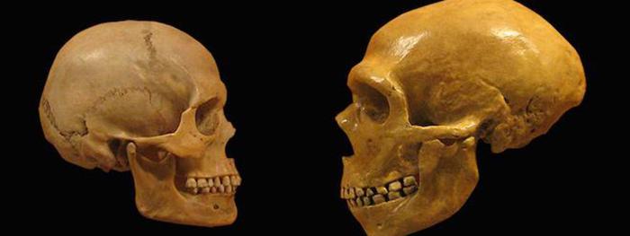 neandertal_sapiens