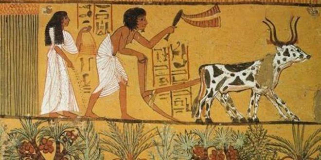 tarım devrimi ile ilgili görsel sonucu